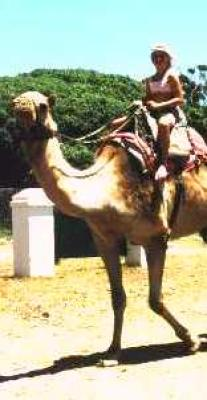 Camel Safari