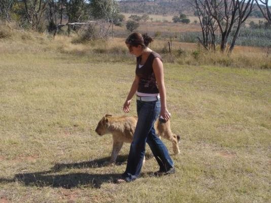 walking with lion