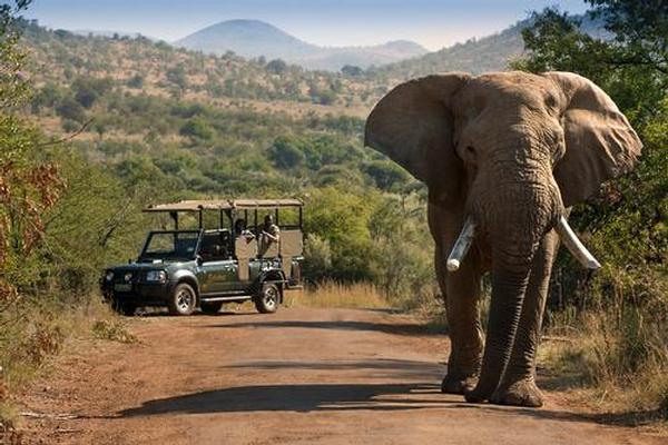 Bakubung Lodge Game Drive