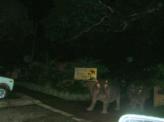 Hippo's Entrance of Property